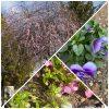 花の季節の中🌸