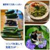 夏野菜で\(^^)/